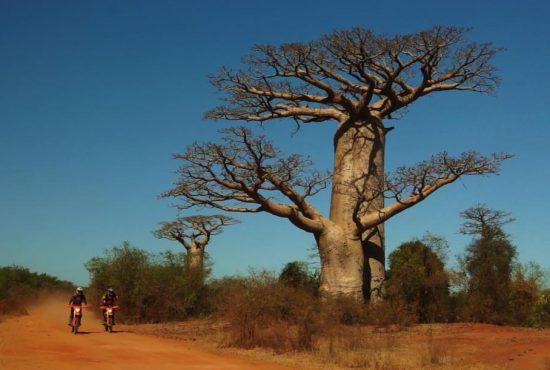 piste-trial-baobab